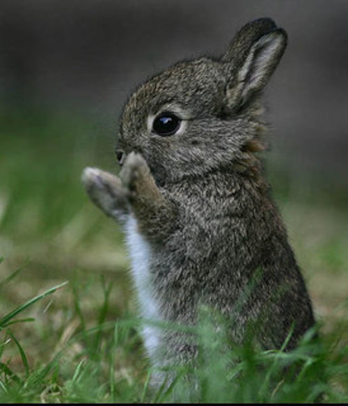 Time for ... BUNNIES! (2/6)