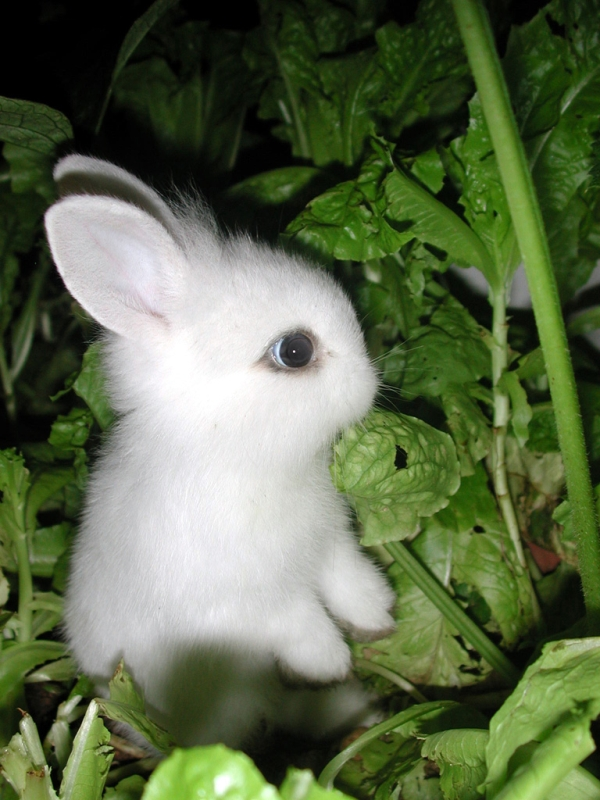 Time for ... BUNNIES! (3/6)