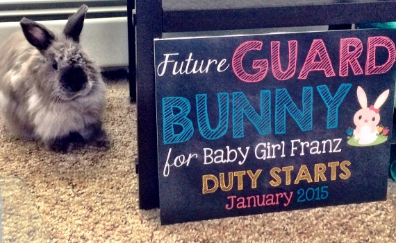 Guard bunny